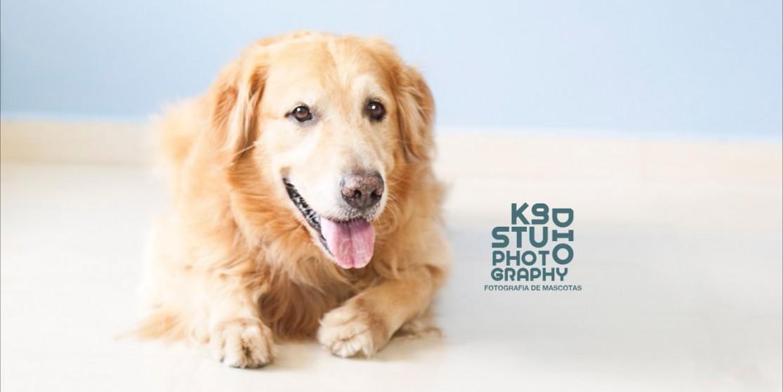 K9 studio dog photography